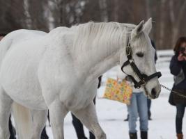 【競馬】 アドマイヤコジーンが種牡馬引退