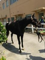【競馬】 エイシンフラッシュ弟の馬名。マツリダバッハに決定か!?