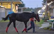 【競馬】 ■島川オーナーの最高傑作!サンセットトウホクが始動!■