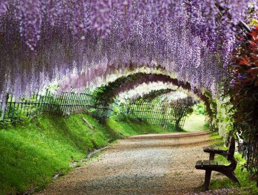 """日本人でも「行ってみたい」と思ってしまう絶景たちがズラリ、CNN選出""""日本の美しい場所31選""""(画像) … 知らない所ばかりで驚いた件"""