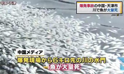 爆発事故のあった中国・天津市の近くの川で、魚の大量死が見つかる(画像) … 原因は不明、中国当局「原因が分かり次第、すぐに公表する」