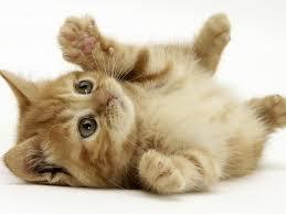【悲報】家の猫をいじめてた中学生をドブに突き落とした俺の末路wwwwwwwwwwwwwww