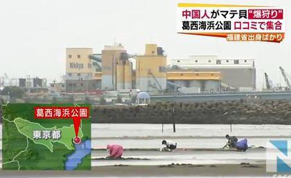 """中国人、東京・江戸川区葛西海浜公園の浜辺でマテ貝""""爆狩り"""" (動画) … 口コミで広がる。おいしいと評判"""