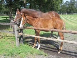 【競馬】 トウショウ牧場閉鎖を受けて、スイープトウショウなどがノーザンファームに売却へ