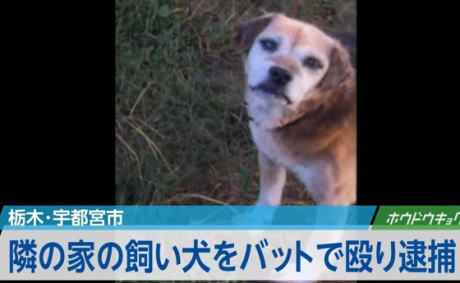 隣の家のビーグル犬を金属バットで数回殴り、脳挫傷などのケガを負わせる … パート従業員・厚海健一容疑者(42)を逮捕、「うるさかったから頭に来た」と供述 - 栃木・宇都宮