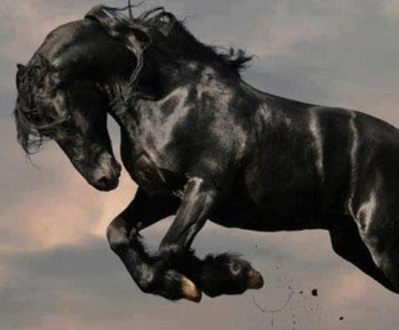全身黒色「メラニズム」の動物たち、神秘的すぎてカッコイイと話題に(画像)