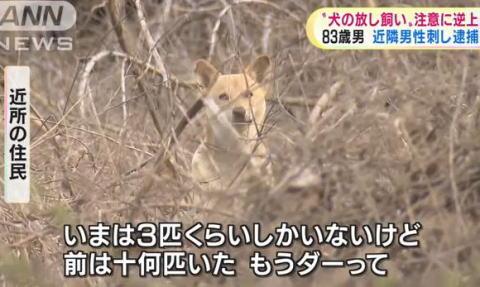 83歳の櫛村三義容疑者、「犬の放し飼いをするな」と注意した70歳の男性に逆上し包丁で刺す … 近所の住民「皆、迷惑していた。前は十何匹いた。もうダーって」 - 熊本・宇土