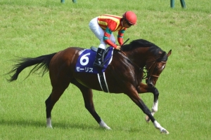 【競馬】 モーリスの初年度種付け料は400万円