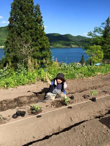 木崎湖の見える畑で苗の定植をするみほちゃん