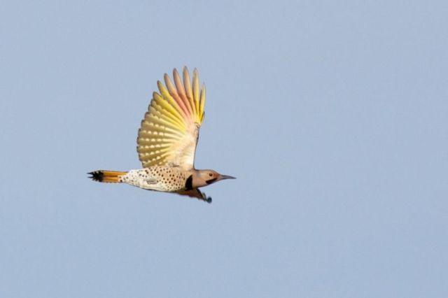 12-3-13-F02 [Quiz Bird B]