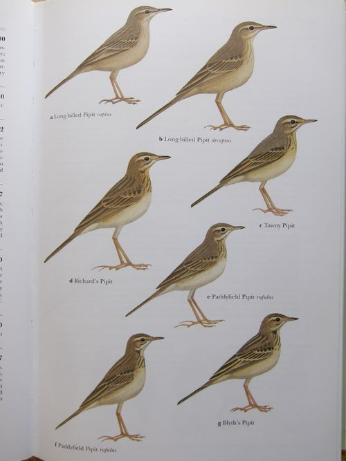 Fig 3 Bird book (2 of 4)-1