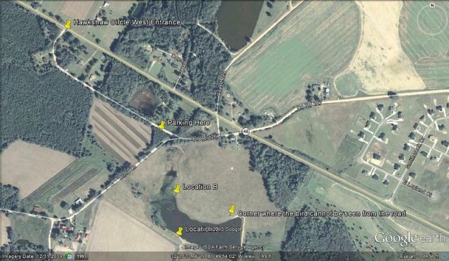 ABArare Northern Lapwing map 3