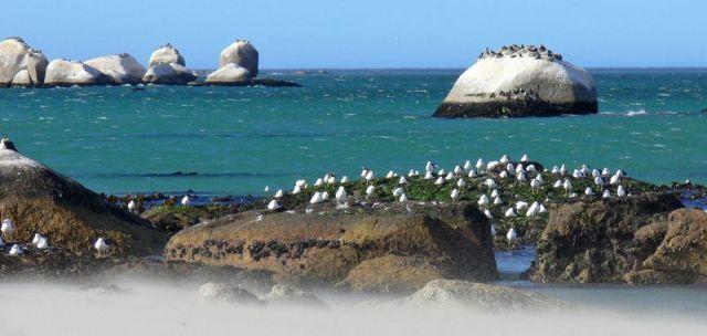 Boulders & birds, St. Helena Bay, Cape Town, by Markus Lilje X