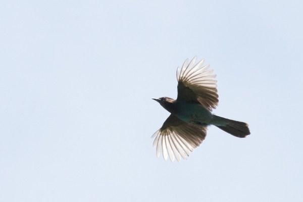 13-6-16-02 [Quiz Bird B]