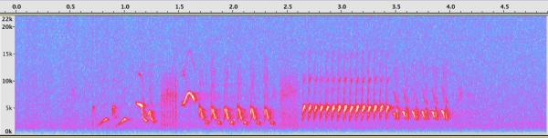 15-Lark Sparrow spectrogram