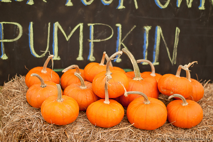 Pumpkin Party | Mini Pumpkins