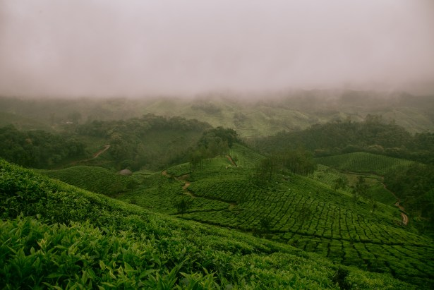 Tea Terroirs Mountainous