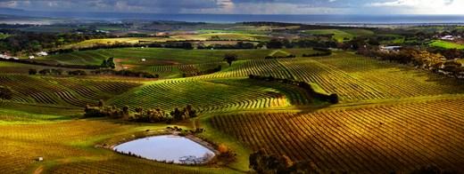 wineandcompany.ro bordeaux