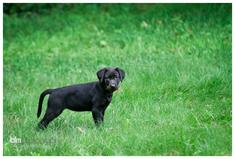 Webber-Puppies_072115-3988.jpg