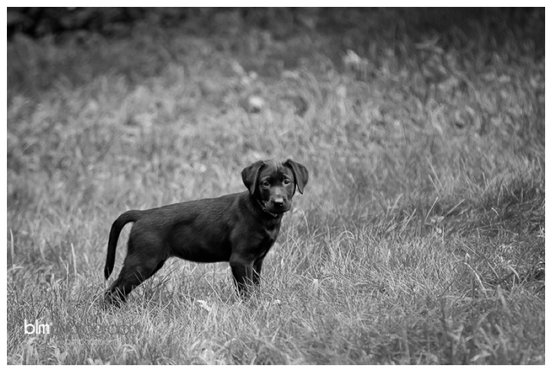Webber-Puppies_072115-3991.jpg