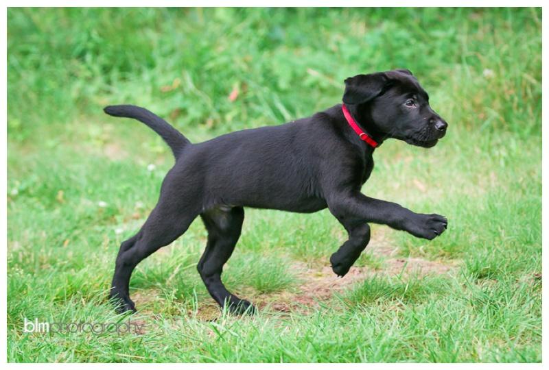 Webber-Puppies_072115-4125.jpg