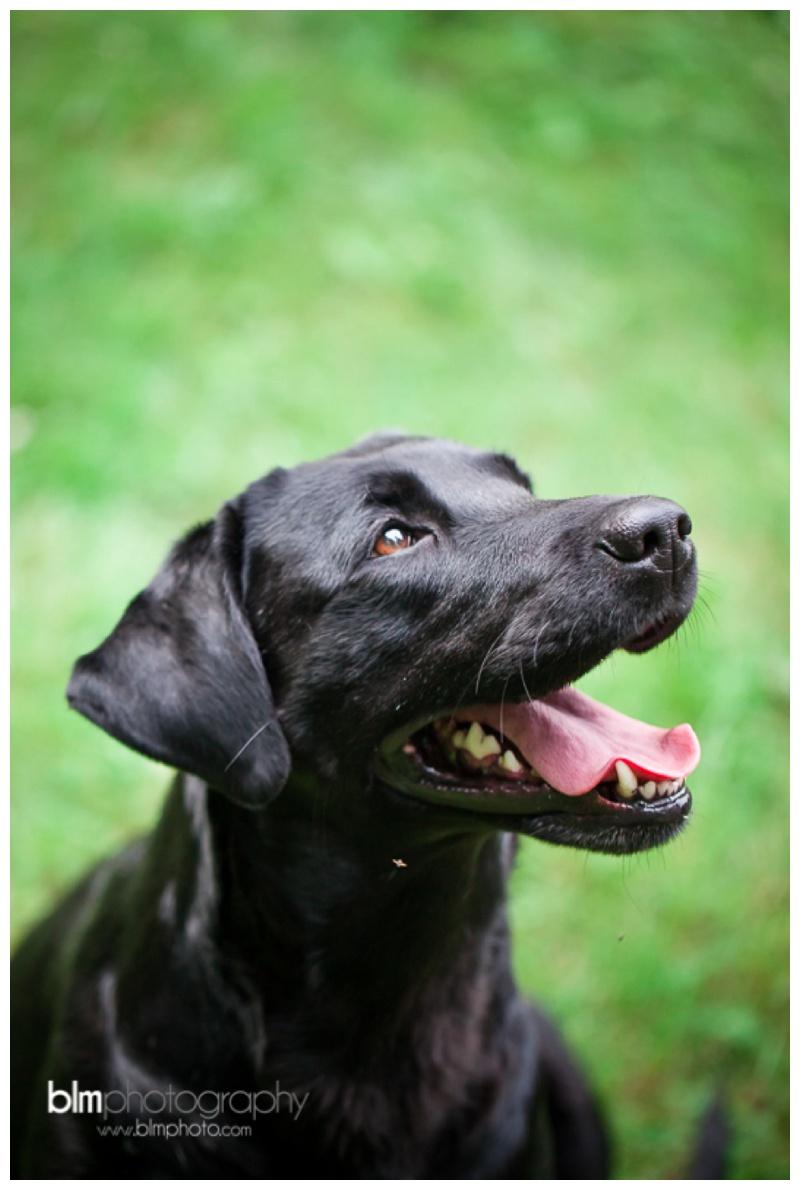 Webber-Puppies_072115-8091.jpg