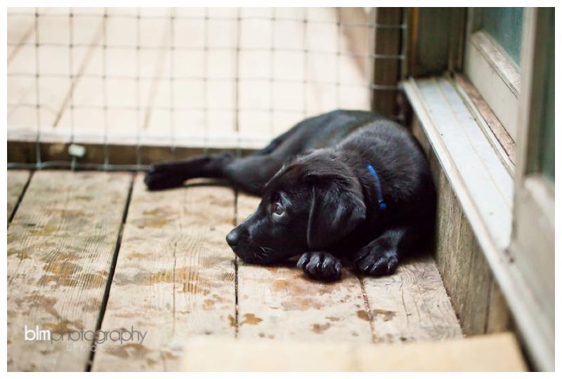 Webber-Puppies_072115-8259.jpg