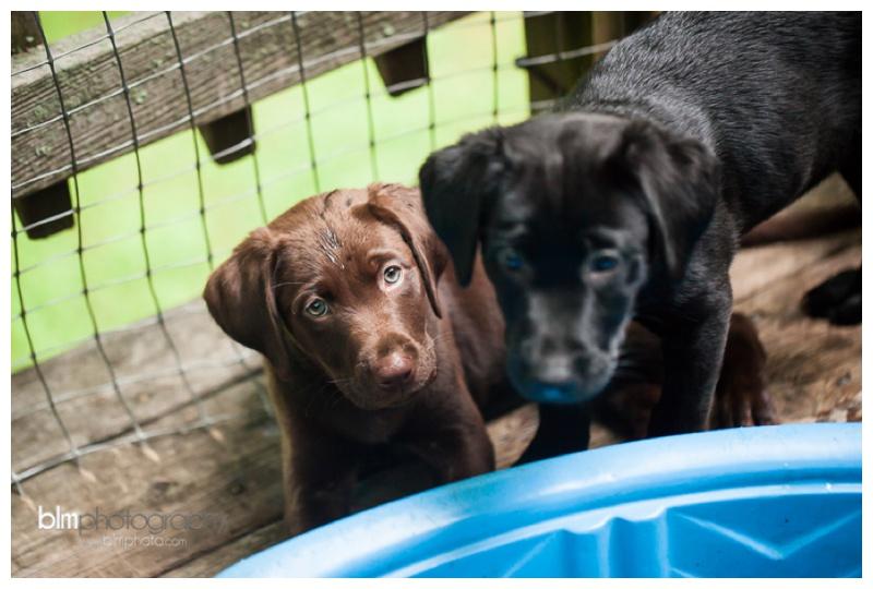 Webber-Puppies_072115-8270.jpg