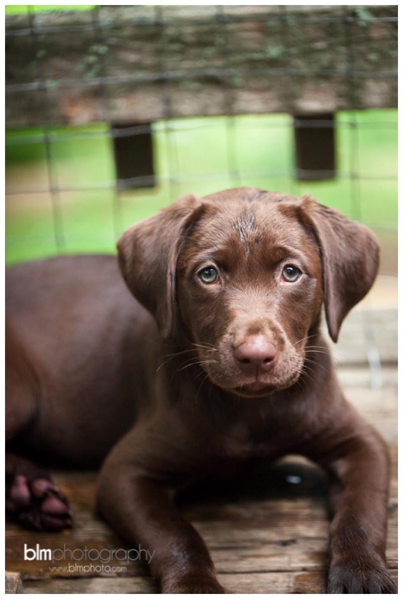 Webber-Puppies_072115-8285.jpg