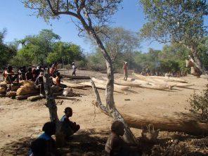 Opening Andranolava's mangrove reserve