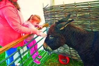 Spring Farmyard Donkey