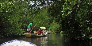 Journalists visited a mangrove forest in Nusa Lembongan, Bali, in a field trip as part of their training on REDD+ and the role of wetlands
