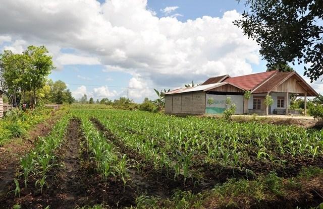Kalampangan, desa transmigrasi yang sukses menjadi penyalur sayuran segar untuk Palangkaraya, Kalimantan Tengah.