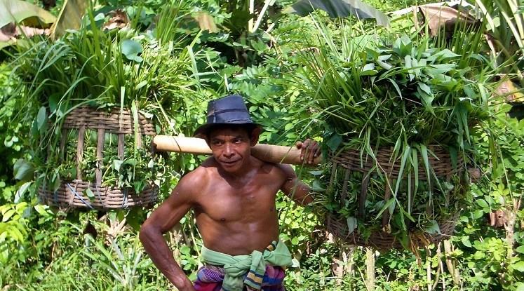 Seorang pria memikul hasil hutan. Indonesia, Mei 2004.  Foto: Charlie Pye-Smith / CIFOR