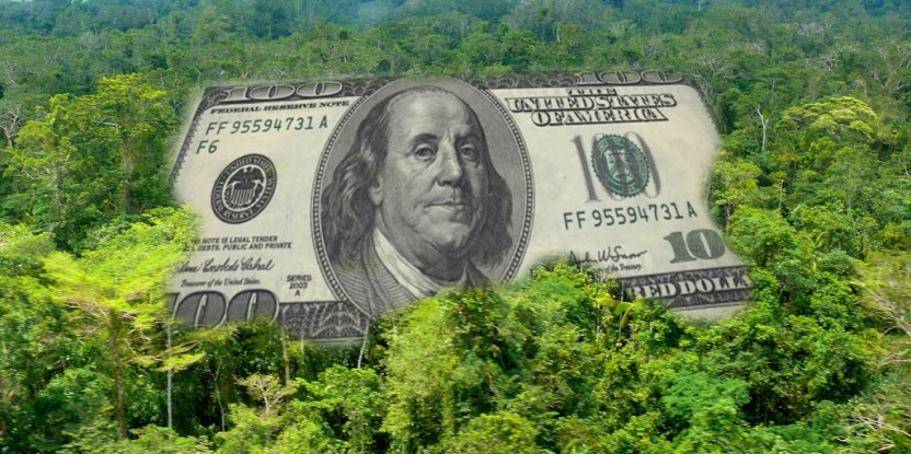 money_forest