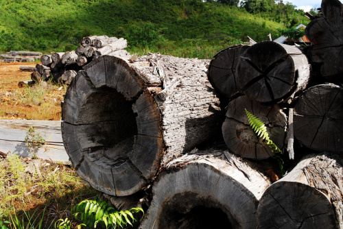 Ex-sawmill, Kalimantan, Indonesia, 2009.  ©Center For International Forestry Research/Ryan Woo