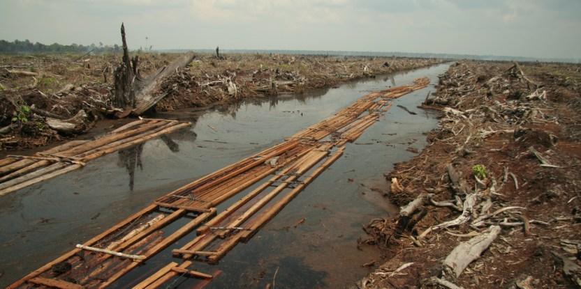 El último lote de madera aserrada proveniente de los bosques de turbera en Indragiri Hulu, Provincia de Riau. Fotografía de Aidenvironment/flickr.