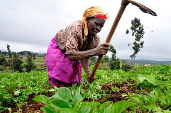 Algunos de los requerimientos de la agricultura – dependiendo del tipo de cultivos – pueden entrar en conflicto con los beneficios ambientales de largo plazo. Neil Palmer (CIAT).