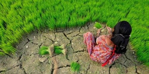 Perubahan iklim memberikan dampak besar pada sektor pertanian. Neil Palmer (CIAT).