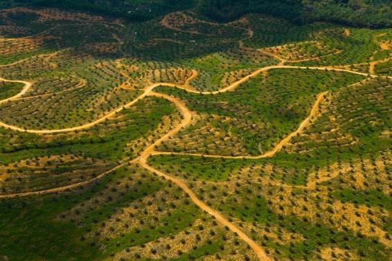 Pemandangan arial perkebunan kelapa sawit di lahan gundul di Sabah, Malaysia. WWF Belanda