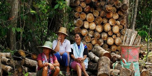 Arahan baru kebijakan zona khusus taman nasional memungkinkan komunitas lokal memiliki hak untuk memanfaatkan sumber daya hutan, seraya tetap mematuhi peraturan menjaga kawasan lindung. Achmad Ibrahim/CIFOR