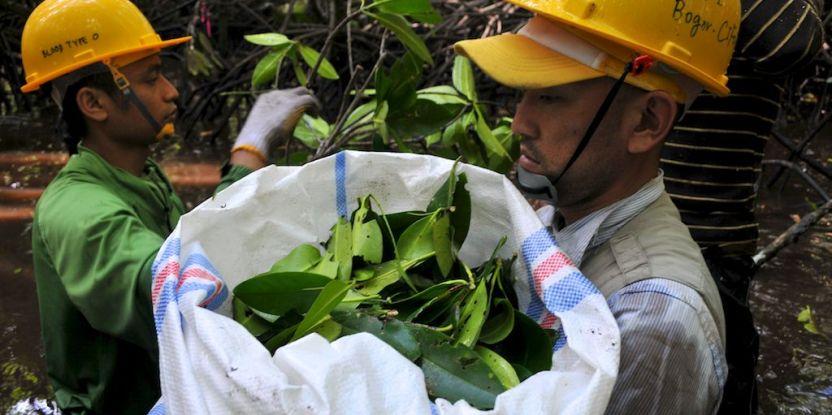 Mangroves_0046