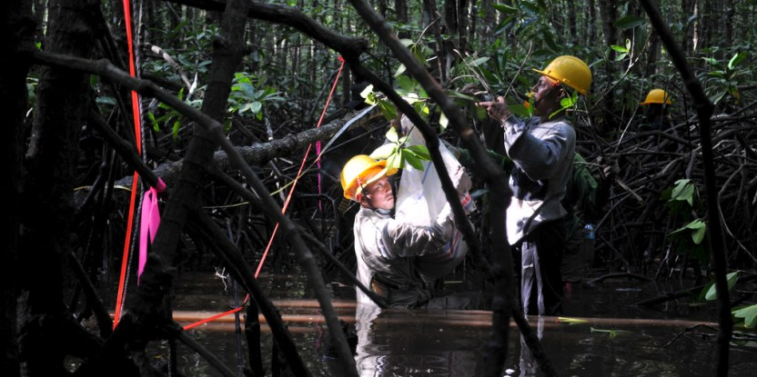 Mangrove science is dirty, but important to find out more about these unique ecosystems. Kate Evans/CIFOR