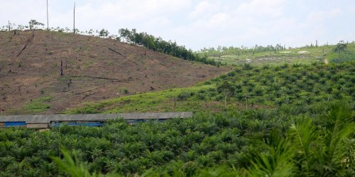 Lahan yang dibuka untuk perkebunan kelapa sawit, Kalimantan Timur. Mokhamad Edliadi/ CIFOR