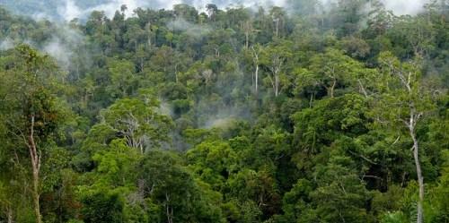 Hutan produksi alam di areal konsesi di Long Bagun, Kabupaten Kutai Barat, Kalimantan Timur, Indonesia.Michael Padmanaba/CIFOR