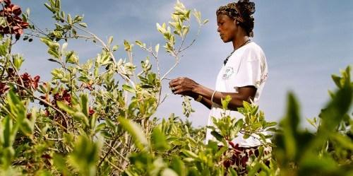 Data PBB mengindikasikan peningkatan populasi global dari 7 miliar menjadi 9 miliar lebih tahun 2050, yang makin mendorong tingginya angka deforestasi di wilayah tropis dan memperparah ancaman kesehatan. CIFOR/Olivier Girard