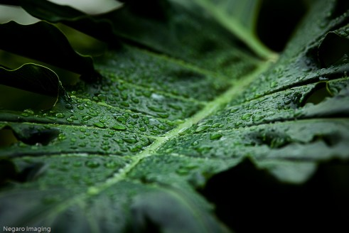コンゴ盆地の広大な森林がなければ、降雨プロセスがひどく破壊されるだろう。