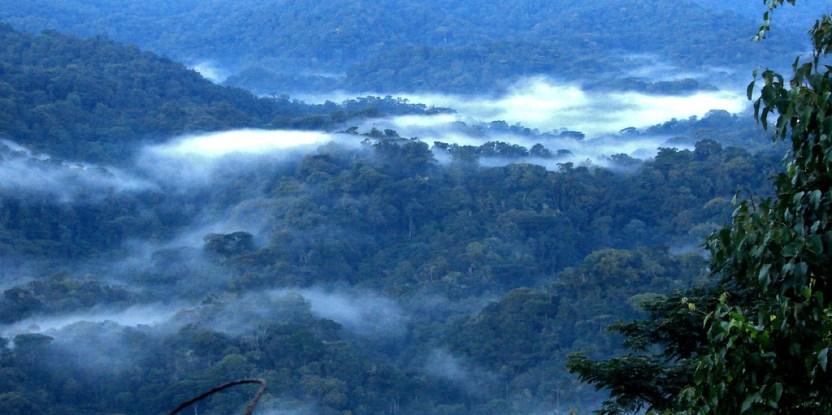 Tropical forest landscape in Uganda. Douglas Sheil/CIFOR