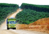 Jika pengaman digunakan secara efektif, mereka memungkinkan investasi swasta mengalir masuk sebagai kebutuhan dan kenyataan bahwa potensi mereka bisa memberi kontribusi signifikan pembiayaan REDD+, kata Maria Brockhaus, ilmuwan Center for International Forestry Research. CIFOR/Ryan Woo