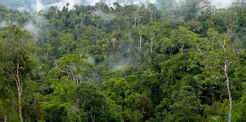 Suatu badan monitoring emisi telah terbentuk, bertugas melaporkan langsung kepada Presiden Indonesia, merupakan pemenuhan salah satu dari beberapa kriteria rinci dalam kesepakatan kemitraan perubahan iklim tahun 2010 dengan Norwegia. CIFOR/Murdani Usman
